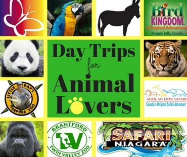 family road trips animal lovers