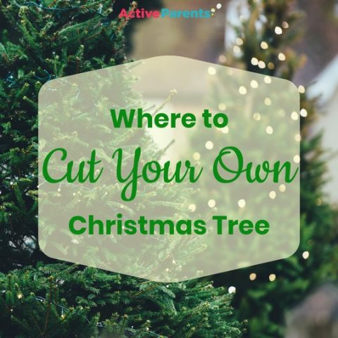 Where to Cut Your Own Christmas Trees in Southern Ontario