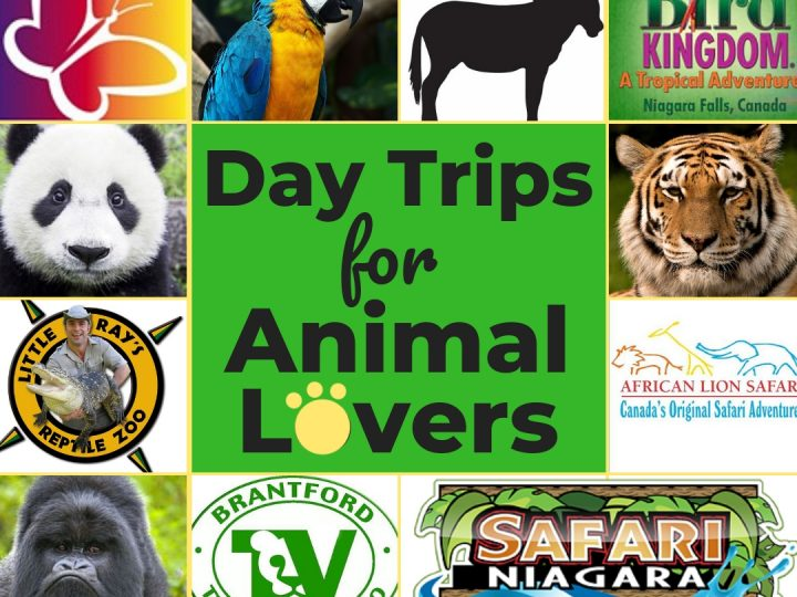 Family Road Trips: Animal Lovers
