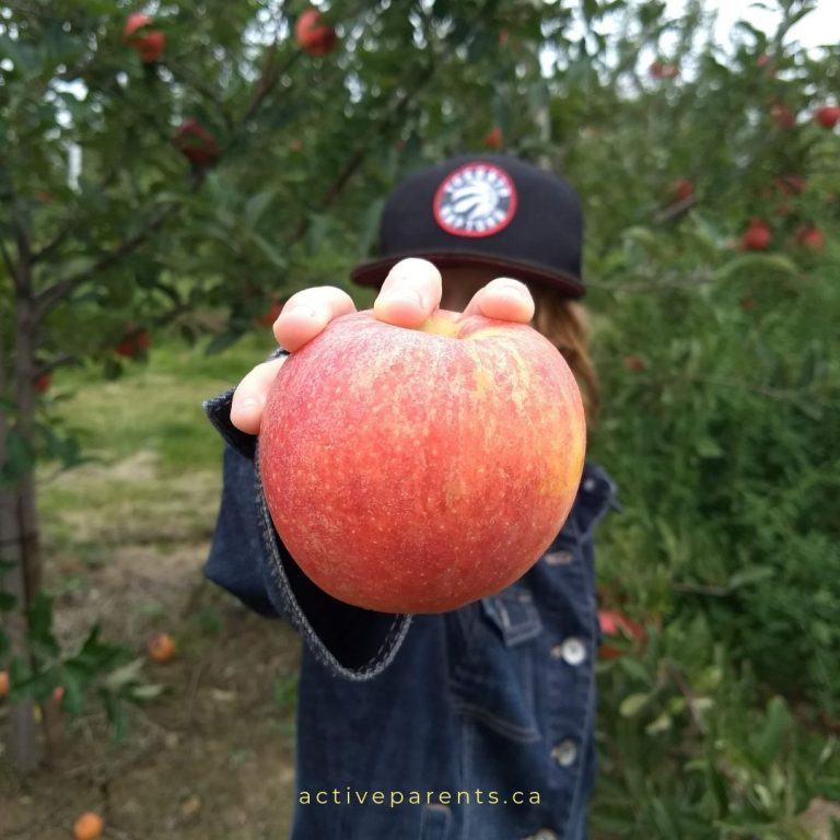 pick your own apples at halton and hamilton apple orchards