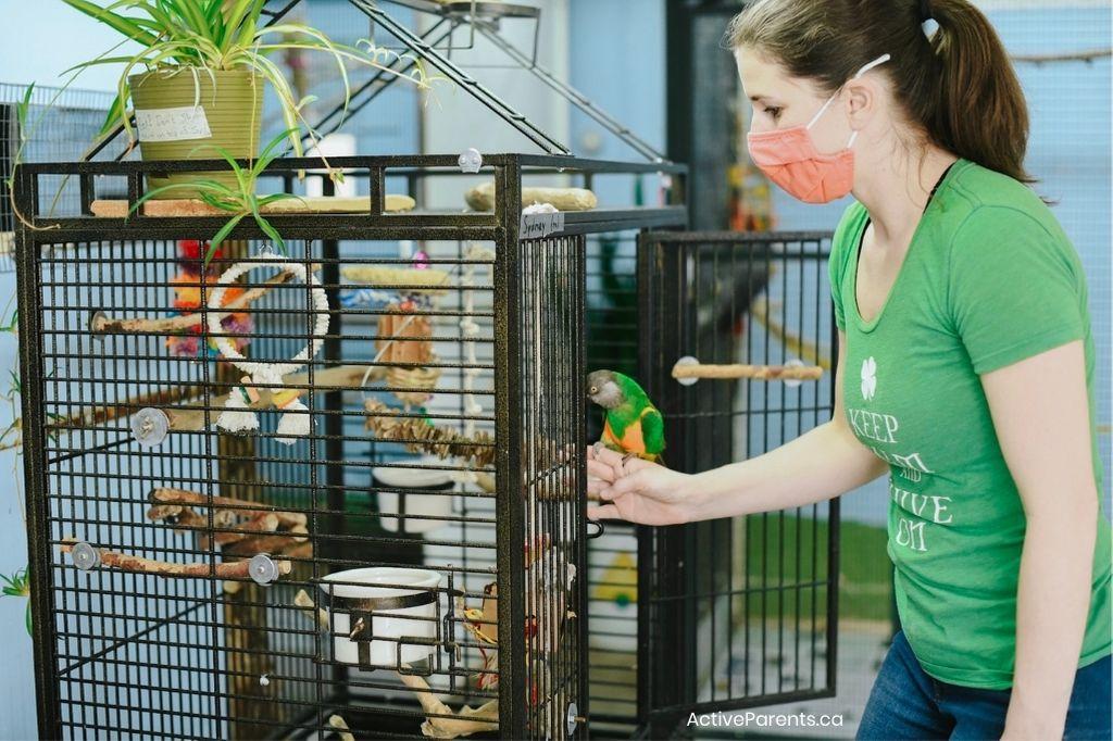 parrots at the hamilton aviary