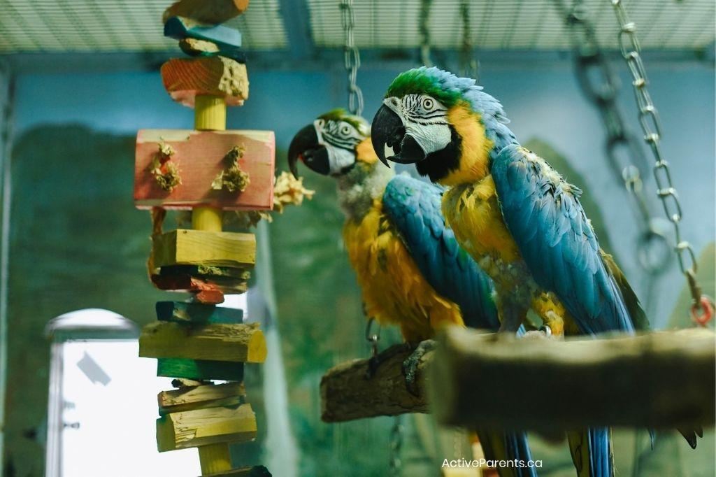 macaws at the hamilton aviary