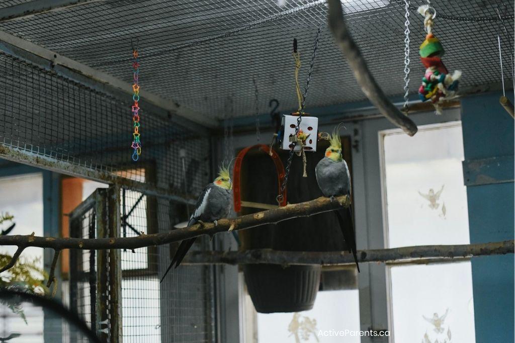 birds at the hamilton aviary