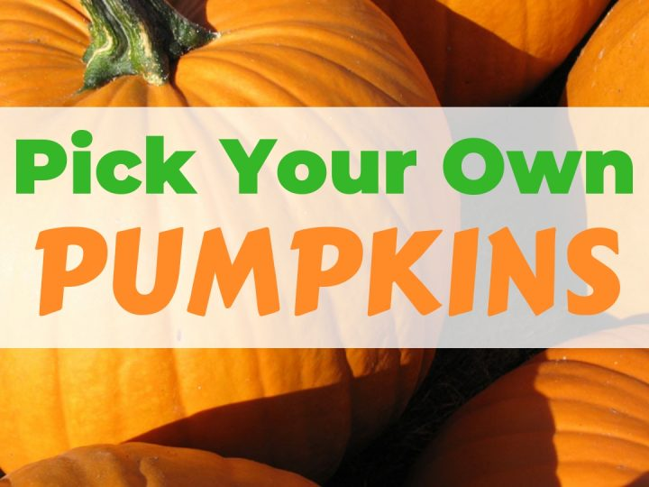 The Best Local Pumpkin Patches