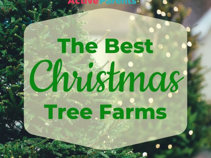 All The Best Christmas Tree Farms