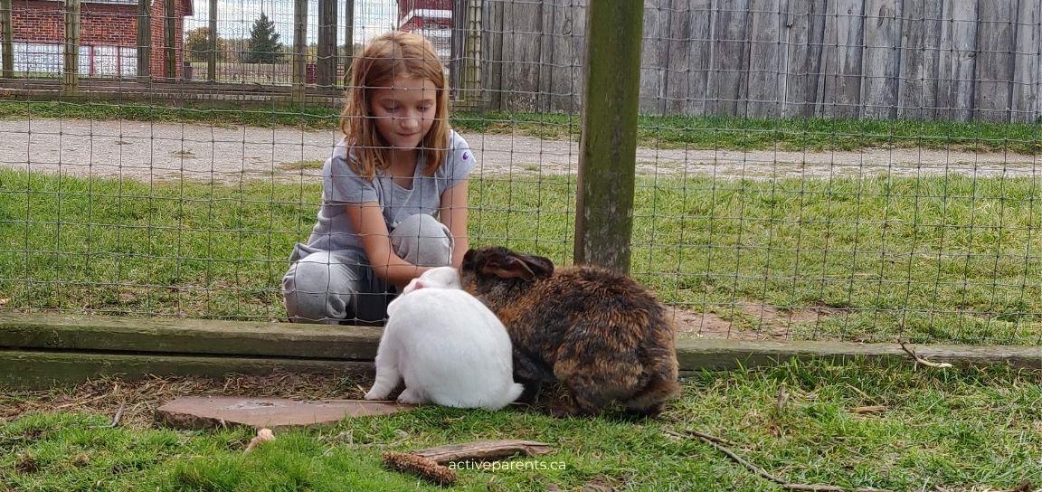 Bronte Creek Park rabbits and animals
