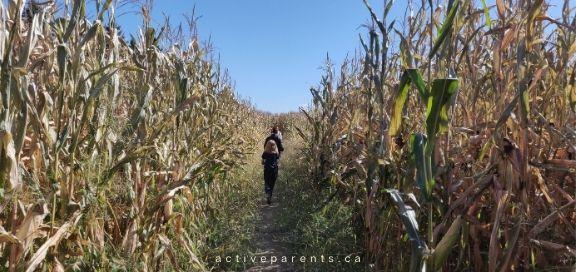Hanes Corn Maze