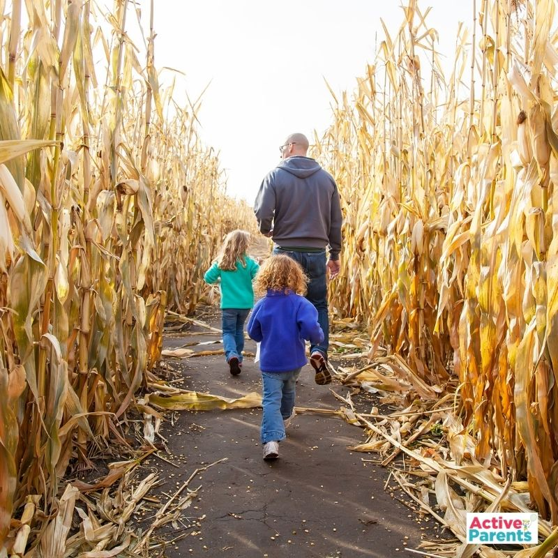 corn mazes hamilton burlington oakville