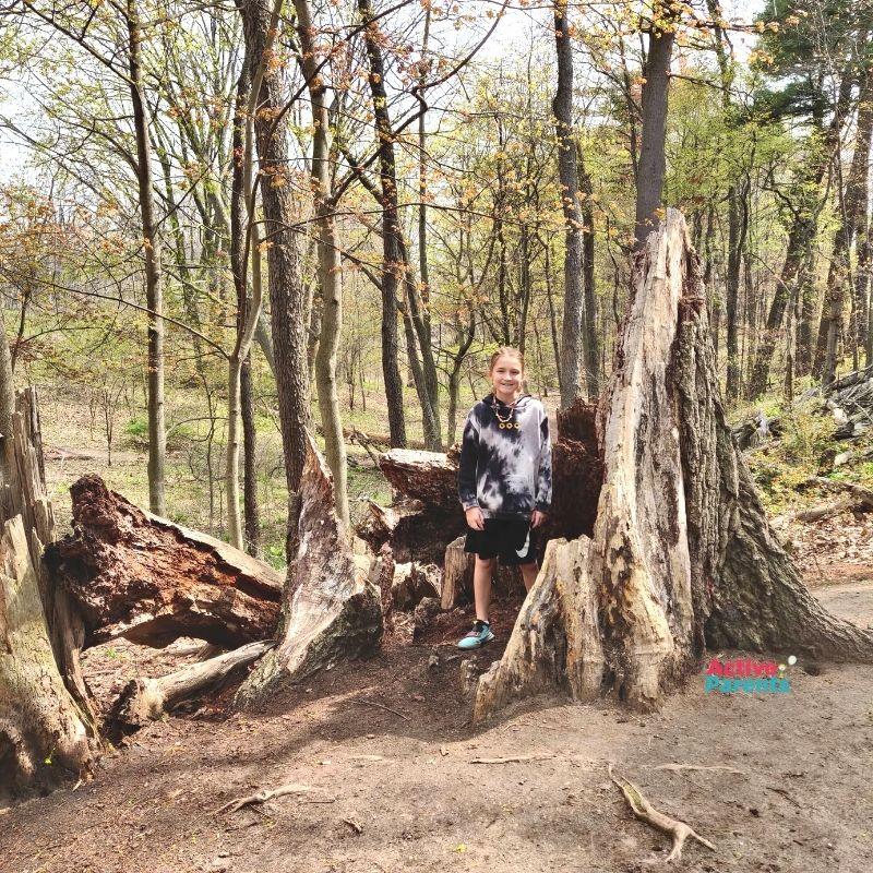 lasalle park forest woods