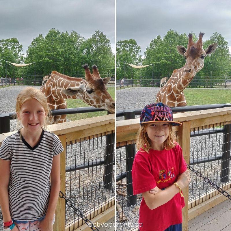 giraffes and the girls